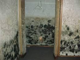 closet mold